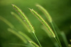 Free Green Grass Royalty Free Stock Photos - 10316608