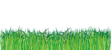 Green grass. Fresh green grass - vector illustration Royalty Free Stock Photos