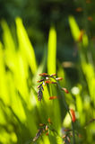 Green grass. Green lush grass out of focus royalty free stock images