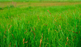 Green grass Stock Images