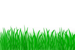 Green grass. The abstract green grass background royalty free illustration