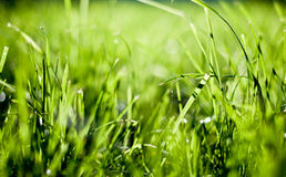 Green grass. Field in the light of the sun Stock Images