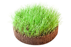 Green grass. On white background Stock Image