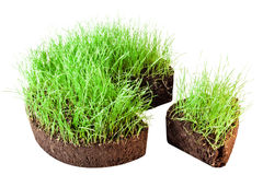 Green grass. On white background Royalty Free Stock Photos
