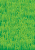 Green_grass Immagine Stock