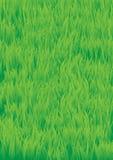 Green_grass Stock Image
