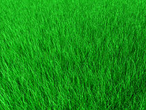Green grass. Texture of green grass. 3d rendered Royalty Free Stock Image