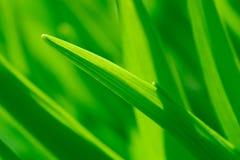 Green grass. Macro photo of green grass in the garden Stock Photos