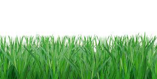 Green grass. Isolated on white background Stock Photo