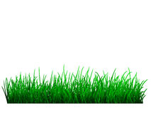 Green grass. Vector realistic green grass on white Stock Photo