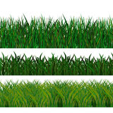Green  grass. 3 types of green  grass Royalty Free Stock Images
