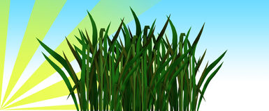 Green  grass. Green grass with the sky and sun Royalty Free Stock Image