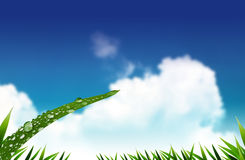 Green grass. On blue sky Royalty Free Stock Images