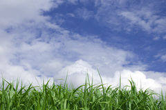 Green grass. With blue sky and clouds Stock Image