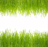 Green Grass. Isolated green grass on white background Royalty Free Stock Images