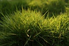 Green grass. Sunlight falling on green grass Royalty Free Stock Image