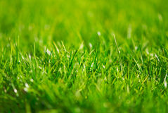 Green grass. Outdoor in the park Royalty Free Stock Image