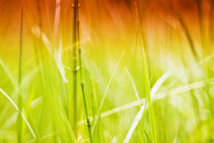 Green grass in morning sunlight royalty free stock photos