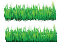 Green grass. Realistic green grass, vector format is available Stock Images