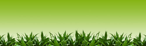 Green grass background. Green Grass Isolated on green background Royalty Free Stock Images