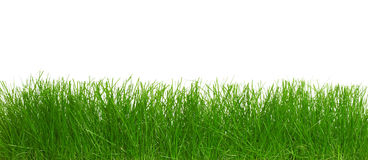 Green grass. Royalty Free Stock Images
