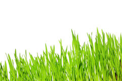 Green grass. On a white isolated background Stock Image