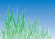 Green grass. Vector green grass, blue sky as a background Royalty Free Stock Images