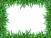 Green Grass. Isolated for Web page Royalty Free Stock Images
