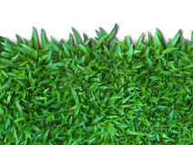 Green Grass. Isolated for Web page Stock Photos