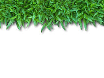 Green Grass. Isolated for Webpage Royalty Free Stock Photography