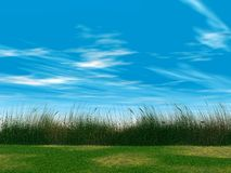 Green grass. Juicy green grass on a background cloudy sky Royalty Free Stock Image