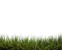 Green grass. Background on the white Royalty Free Stock Photography