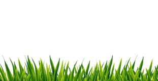 Green grass. Image of grass over white background Stock Images
