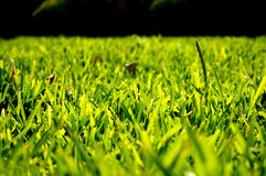 Green Grass. A daylight shot of a bright green grass in a random Park Royalty Free Stock Photography
