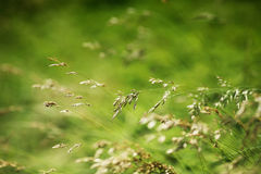 Green grass. Background of green grass, shallow depth of field stock images