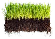 Free Green Grass Royalty Free Stock Photo - 15088125