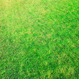 Green grass. Field for backgrounds Stock Images