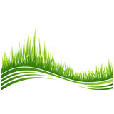 Green grass. Vector illustration of green grass wave background Stock Photography
