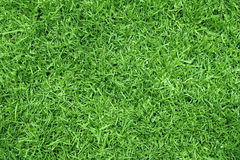 Green Grass. Background of Neat Green Grass Lawn Royalty Free Stock Photos