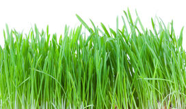 Green grass. Closeup shot on green grass Stock Photos