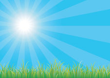 Green grass. Blue sky with green grass Royalty Free Stock Image