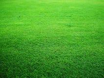 Green grass. Closeup on naturtal green grass Royalty Free Stock Photos