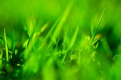 Green grass. Abstract, super shallow depth of field shot of vivid green grass royalty free stock photo