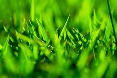 Green grass. Abstract, super shallow depth of field shot of vivid green grass royalty free stock image