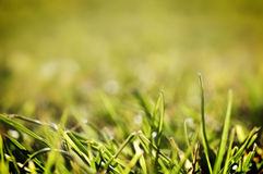 Green Grass. Beautiful green grass, extremely shallow depth of field. An image that could easily be used in any design, enjoy Stock Images