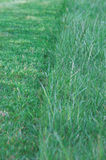 Green Grass 2. Green grass in the middle of being mown Royalty Free Stock Images