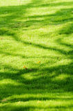Green grass. The photo is Green grass background stock image