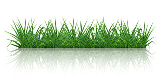 Green grass. On  white, computer illustration Royalty Free Stock Image