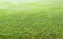 Green grass. Background texture straight Stock Image