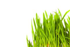 Free Green Grass Stock Images - 2110104